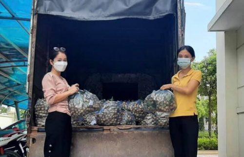Các cấp Hội phụ nữ huyện Gia Lâm hỗ trợ tiêu thụ nhãn lồng cho các gia đình trên địa bàn