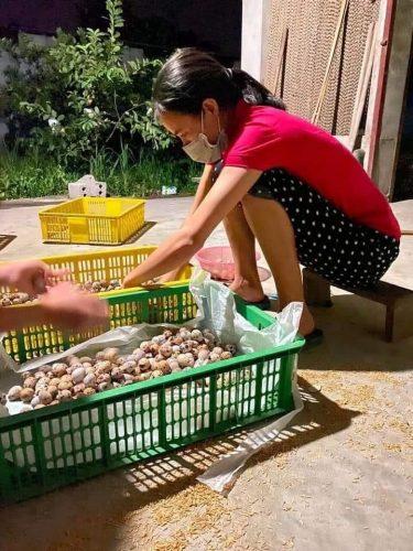 Các cấp Hội phụ nữ huyện Mỹ Đức tiêu thụ trứng chim cút cho bà con nông dân